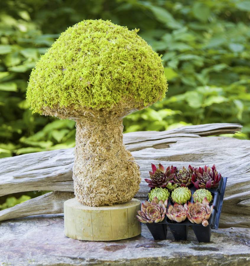 How to make a topiary succulents ball.