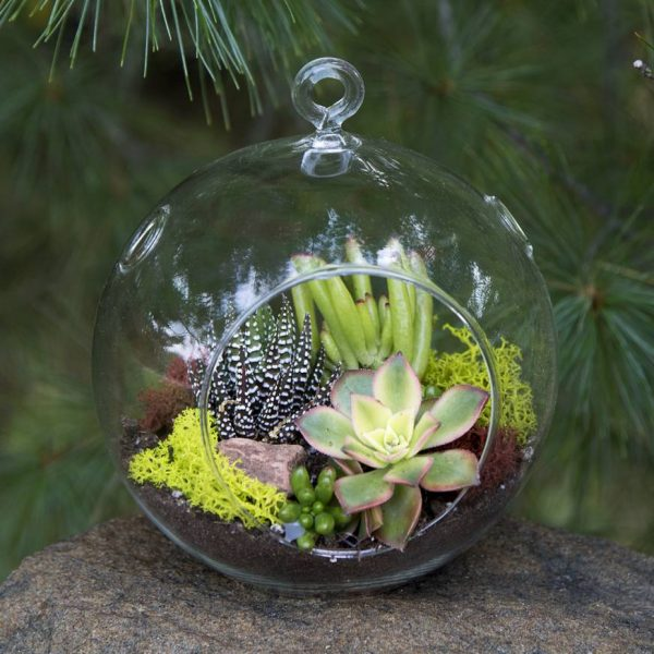 Succulent Terrarium Ball Hanging Glass Ball Terrariums Simply