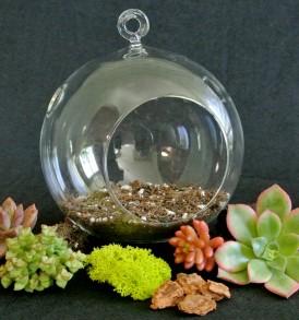 Succulent Terrarium Ball Kit
