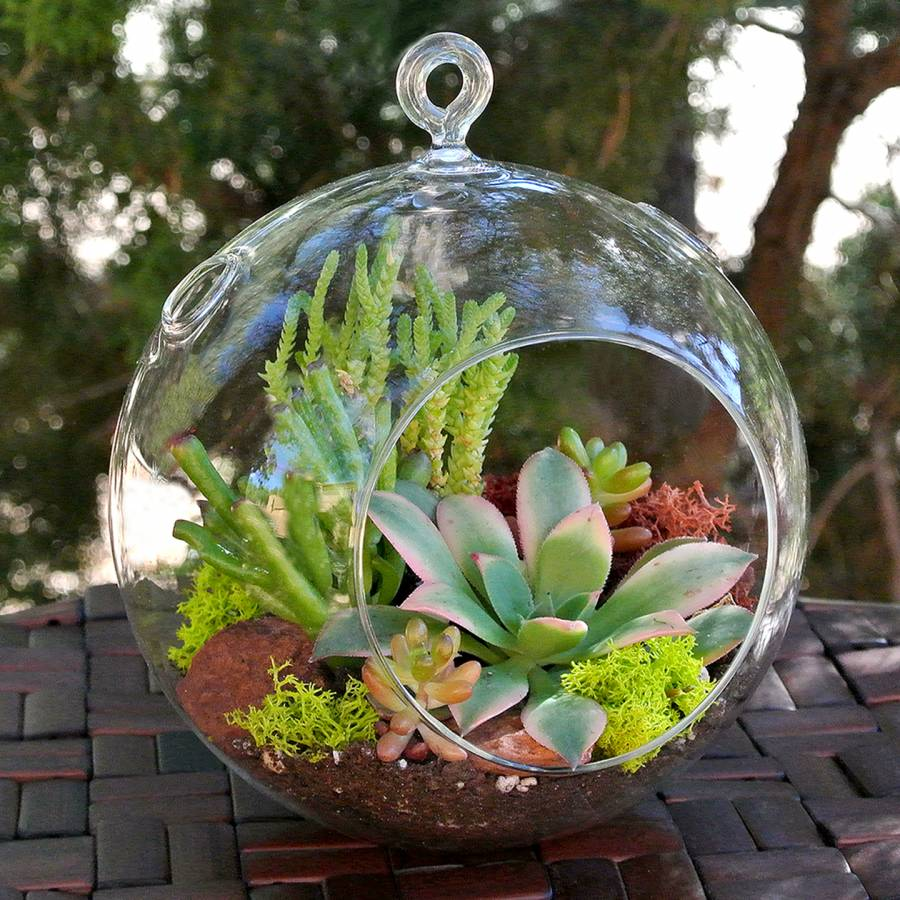 Succulent Terrarium Ball Hanging Glass Ball Terrariums Simply