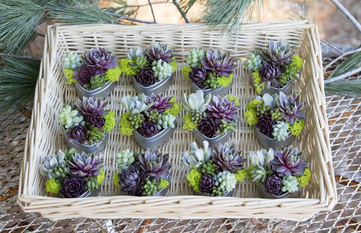Wedding Favors – Succulent Heart Shaped Tins – Set of 6