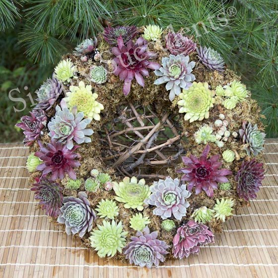 Living Succulent Wreaths for Sale