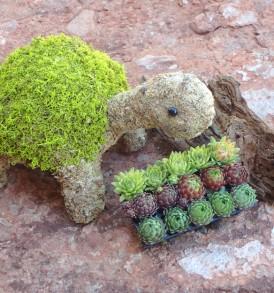 Turtle Topiary Kit