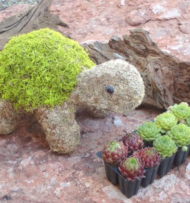 Mini Turtle Topiary kit