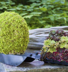 Topiary Snail Kit