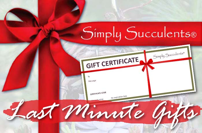 gift-idea-slide-gift-cert2