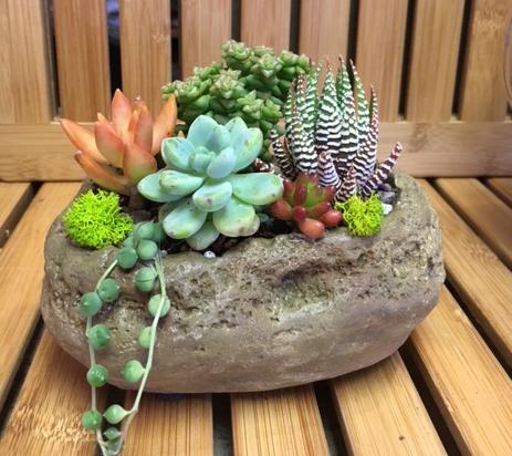 Succulent Stone Planter Simply Succulents