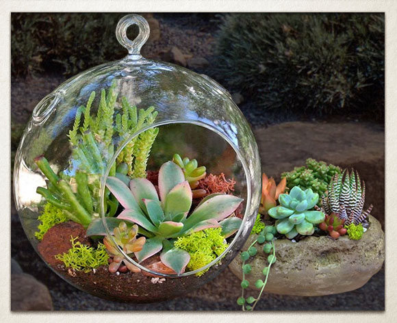 Simply Succulents Shop Indoor Outdoor Succulent Plants